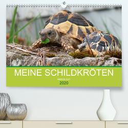 Meine Schildkröten (Premium, hochwertiger DIN A2 Wandkalender 2020, Kunstdruck in Hochglanz) von Sixt,  Marion