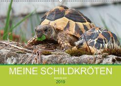 Meine Schildkröten (Wandkalender 2019 DIN A2 quer) von Sixt,  Marion