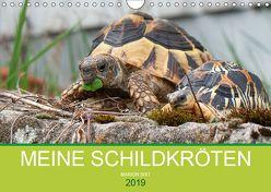 Meine Schildkröten (Wandkalender 2019 DIN A4 quer) von Sixt,  Marion