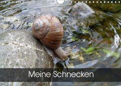 Meine SchneckenAT-Version (Wandkalender 2019 DIN A4 quer) von Schlüfter,  Elken