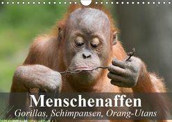Menschenaffen. Gorillas, Schimpansen, Orang-Utans (Wandkalender 2019 DIN A4 quer) von Stanzer,  Elisabeth
