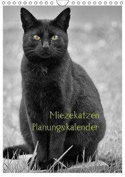 Miezekatzen Planungskalender (Wandkalender 2019 DIN A4 hoch) von Zitzler,  Hans