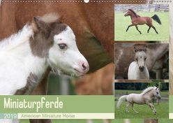 Miniaturpferde – American Miniature Horse (Wandkalender 2019 DIN A2 quer)