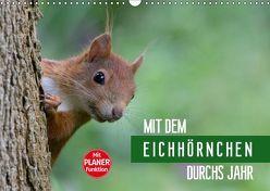 Mit dem Eichhörnchen durchs Jahr (Wandkalender 2019 DIN A3 quer) von Brackhan,  Margret