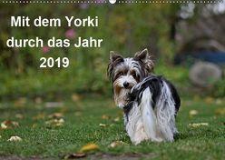 Mit dem Yorki durch das Jahr 2019 (Wandkalender 2019 DIN A2 quer) von Bauer,  Friedhelm