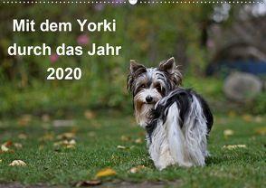Mit dem Yorki durch das Jahr 2020 (Wandkalender 2020 DIN A2 quer) von Bauer,  Friedhelm
