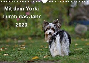 Mit dem Yorki durch das Jahr 2020 (Wandkalender 2020 DIN A4 quer) von Bauer,  Friedhelm