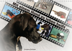Mit einem Hund zu leben heißt … (Wandkalender 2020 DIN A4 quer) von Ströhlein,  Christine