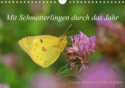 Mit Schmetterlingen durch das Jahr (Wandkalender 2020 DIN A4 quer) von Schäfer,  Ulrike