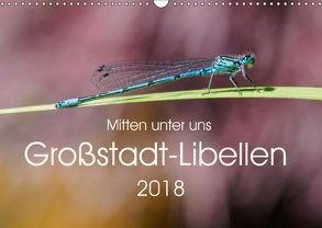 Mitten unter uns – Großstadt-Libellen (Wandkalender 2018 DIN A3 quer) von Wibke Hildebrandt,  Anne