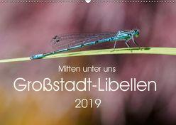 Mitten unter uns – Großstadt-Libellen (Wandkalender 2019 DIN A2 quer) von Wibke Hildebrandt,  Anne