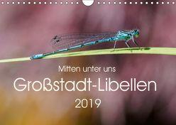 Mitten unter uns – Großstadt-Libellen (Wandkalender 2019 DIN A4 quer) von Wibke Hildebrandt,  Anne