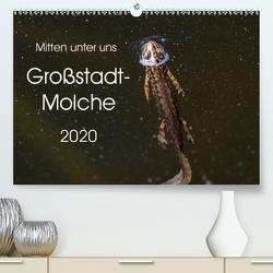 Mitten unter uns – Großstadt-Molche (Premium, hochwertiger DIN A2 Wandkalender 2020, Kunstdruck in Hochglanz) von Wibke Hildebrandt,  Anne