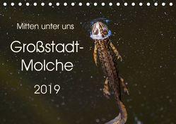 Mitten unter uns – Großstadt-Molche (Tischkalender 2019 DIN A5 quer) von Wibke Hildebrandt,  Anne