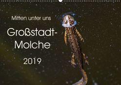 Mitten unter uns – Großstadt-Molche (Wandkalender 2019 DIN A2 quer) von Wibke Hildebrandt,  Anne