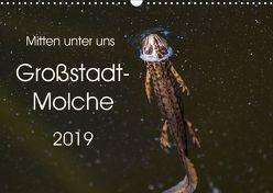Mitten unter uns – Großstadt-Molche (Wandkalender 2019 DIN A3 quer) von Wibke Hildebrandt,  Anne