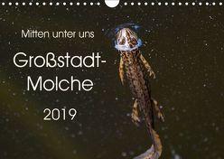 Mitten unter uns – Großstadt-Molche (Wandkalender 2019 DIN A4 quer) von Wibke Hildebrandt,  Anne