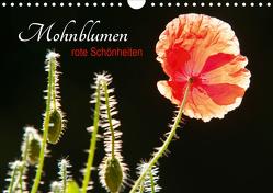 Mohnblumen – rote Schönheiten (Wandkalender 2021 DIN A4 quer) von Bölts,  Meike