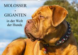 Molosser – Giganten in der Welt der Hunde (Wandkalender 2019 DIN A2 quer) von Starick,  Sigrid
