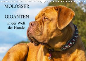 Molosser – Giganten in der Welt der Hunde (Wandkalender 2019 DIN A4 quer) von Starick,  Sigrid