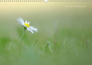 Momente der Leidenschaft (Wandkalender 2018 DIN A3 quer) von Lehmann,  Heiko