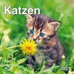 Monatskalender Keith Kimberlin Katzen 2021