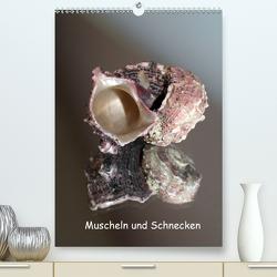 Muscheln und Schnecken (Premium, hochwertiger DIN A2 Wandkalender 2021, Kunstdruck in Hochglanz) von Daus,  Christine