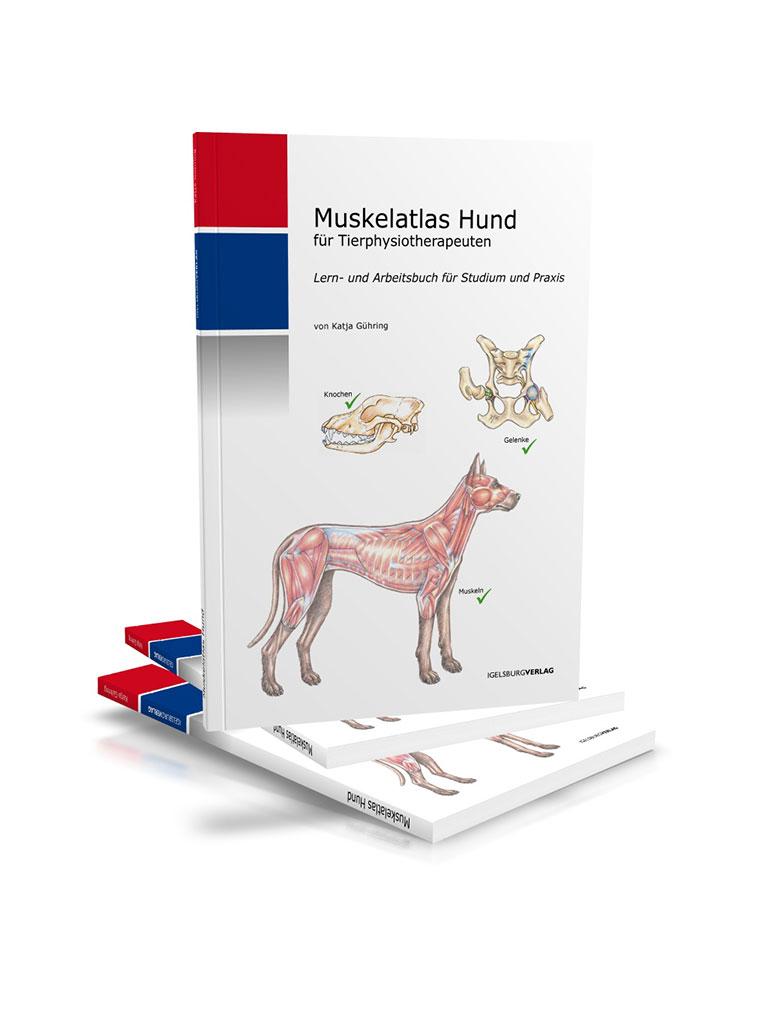 Nett Hund Lungen Anatomie Galerie - Anatomie Und Physiologie Knochen ...