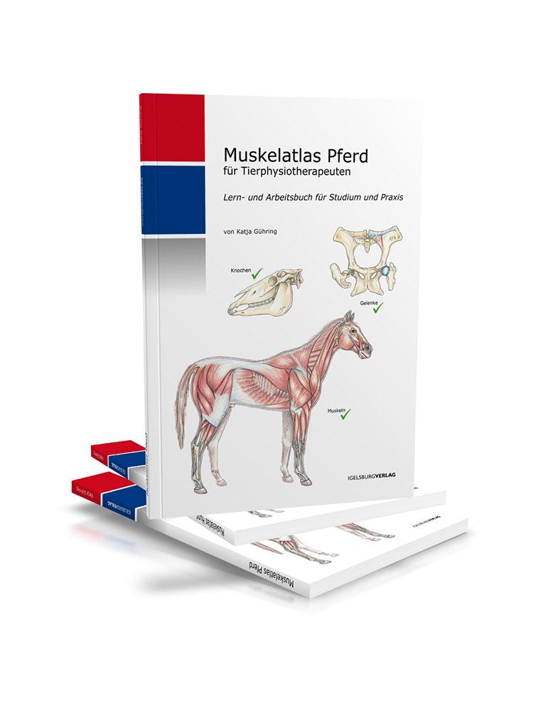 Ungewöhnlich Gaskin Pferd Anatomie Fotos - Anatomie Von Menschlichen ...