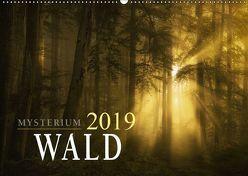 Mysterium Wald (Wandkalender 2019 DIN A2 quer) von Maier,  Norbert