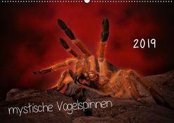 Mystische Vogelspinnen (Wandkalender 2019 DIN A2 quer) von Baderschneider,  Horst