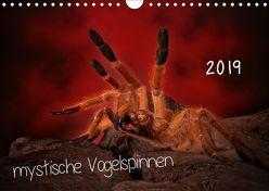 Mystische Vogelspinnen (Wandkalender 2019 DIN A4 quer) von Baderschneider,  Horst
