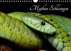 Mythos Schlangen (Wandkalender 2018 DIN A4 quer) von Liepack,  Daniel
