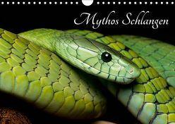 Mythos Schlangen (Wandkalender 2019 DIN A4 quer) von Liepack,  Daniel