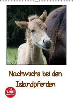 Nachwuchs bei den Islandpferden – Planer (Wandkalender 2019 DIN A2 hoch) von Beuck,  Angelika
