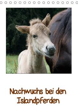 Nachwuchs bei den Islandpferden (Tischkalender 2019 DIN A5 hoch) von Beuck,  Angelika