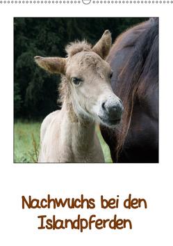 Nachwuchs bei den Islandpferden (Wandkalender 2019 DIN A2 hoch) von Beuck,  Angelika