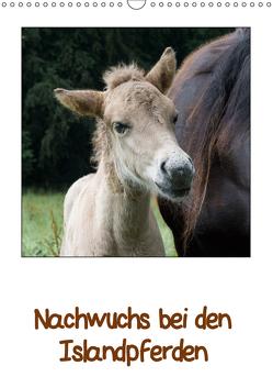 Nachwuchs bei den Islandpferden (Wandkalender 2019 DIN A3 hoch) von Beuck,  Angelika
