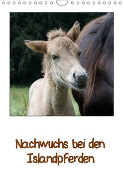 Nachwuchs bei den Islandpferden (Wandkalender 2019 DIN A4 hoch) von Beuck,  Angelika