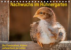 Nachwuchs im Hühnergarten (Tischkalender 2019 DIN A5 quer) von Berkenkamp,  Britta