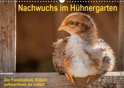 Nachwuchs im Hühnergarten (Wandkalender 2019 DIN A3 quer) von Berkenkamp,  Britta