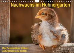 Nachwuchs im Hühnergarten (Wandkalender 2019 DIN A4 quer) von Berkenkamp,  Britta