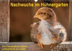 Nachwuchs im Hühnergarten (Wandkalender 2020 DIN A3 quer) von Berkenkamp,  Britta