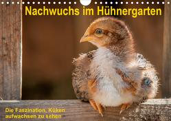Nachwuchs im Hühnergarten (Wandkalender 2020 DIN A4 quer) von Berkenkamp,  Britta