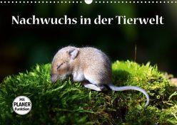 Nachwuchs in der Tierwelt (Wandkalender 2019 DIN A3 quer) von GUGIGEI