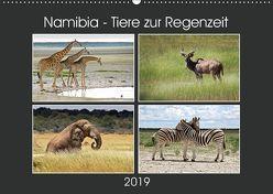 Namibia – Tiere zur Regenzeit 2019 (Wandkalender 2019 DIN A2 quer) von Hamburg, Mirko Weigt,  ©