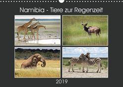 Namibia – Tiere zur Regenzeit 2019 (Wandkalender 2019 DIN A3 quer) von Hamburg, Mirko Weigt,  ©