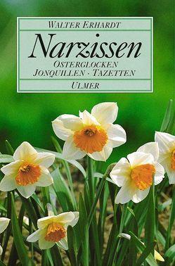 Narzissen von Erhardt,  Walter