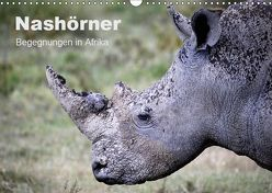 Nashörner – Begegnungen in Afrika (Wandkalender 2019 DIN A3 quer) von Herzog,  Michael