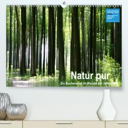 Natur pur – ein Buchenwald im Wandel der Jahreszeiten (Premium, hochwertiger DIN A2 Wandkalender 2020, Kunstdruck in Hochglanz) von Eppele,  Klaus